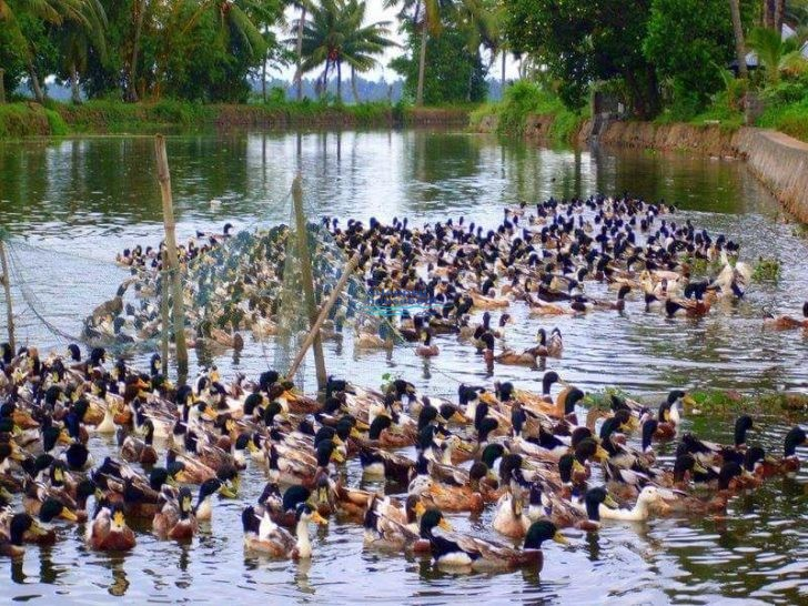 day cruise alleppey